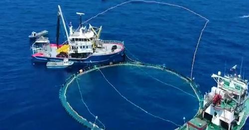 Rama: Nis investimi 10 mln euro, Shqipëria do kthehet në një prej pikave më të mëdha të Mesdheut për distribucionin e peshkut Ton